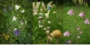 Blumenwiese-300x149
