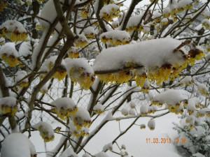 winter 11.3.13 003